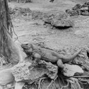 52. 1964. В Гаванском зоопарке, фото 3