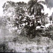 Дорога рядом с Торренсом, фото 2
