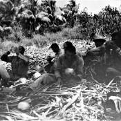 Советские специалисты помогают кубинцам: уборка сахарного тростника, фото 5