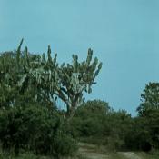 1974. Автомобильная дорога на Французский Уголок  (Rincón Francés), Варадеро