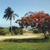 http://cubanos.ru/_data/gallery/foto093/thumbs/thumbs_zl13.jpg