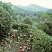 1989-04-16. Сороа. Питомник орхидей, фото 3