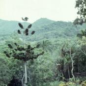 1989-04-16. Сороа. Питомник орхидей, фото 4
