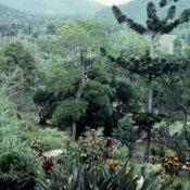 1989-04-16. Сороа. Питомник орхидей, фото 5