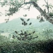 1989-04-16. Сороа. Питомник орхидей, фото 7