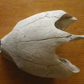 Череп большой черепахи, фото 2