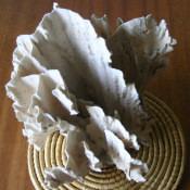 Коралл 6, тип Millepora complanata, фото 5
