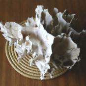 086. Коралл 6, тип Millepora complanata, фото 7