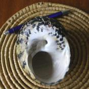 Ракушка Cittarium pica, фото 3