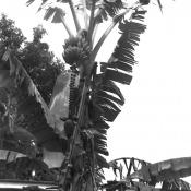Бананы, фото 1