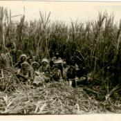 Советские специалисты и кубинцы на плантации сахарного тростника. Республика Куба, г. Гавана. 1961 г.