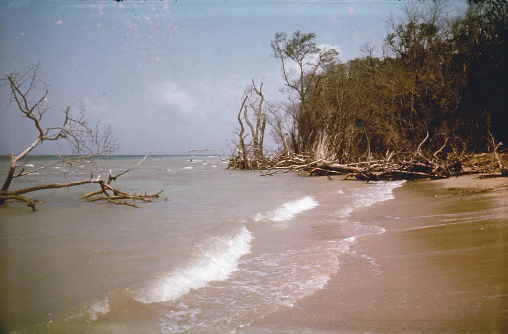 1977. Пляж на острове, куда ездили купаться. Называли это одним словом «Барка».