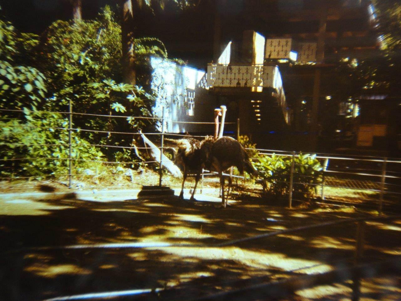161. В Гаванском зоопарке