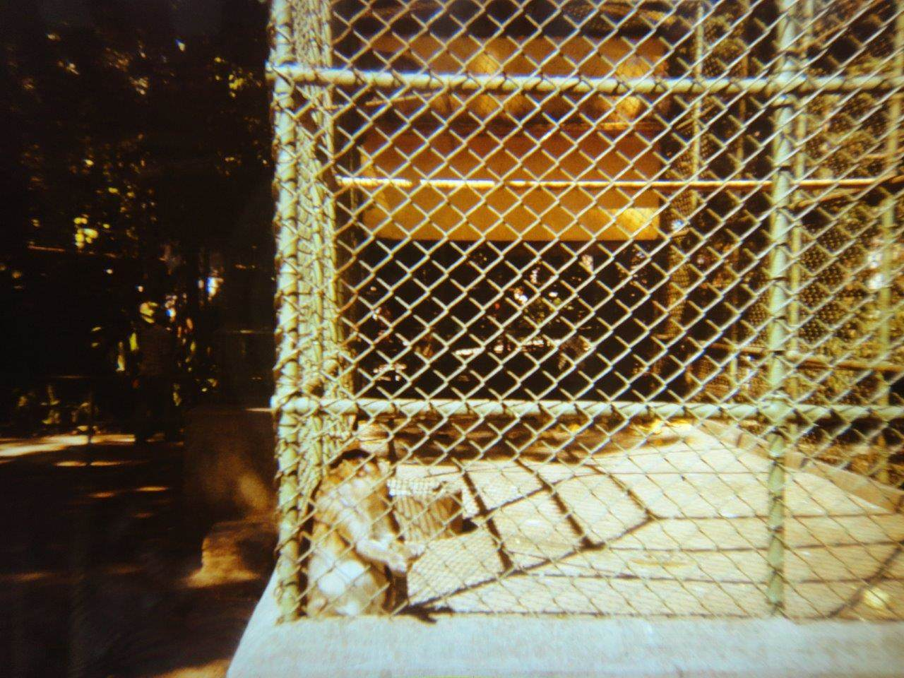 162. В Гаванском зоопарке