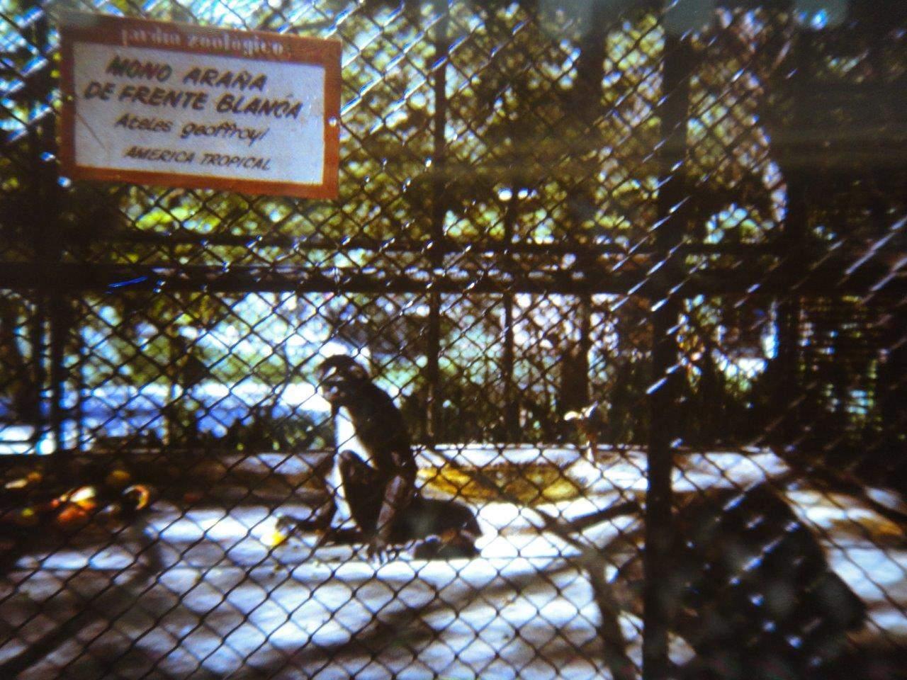 181. В Гаванском зоопарке