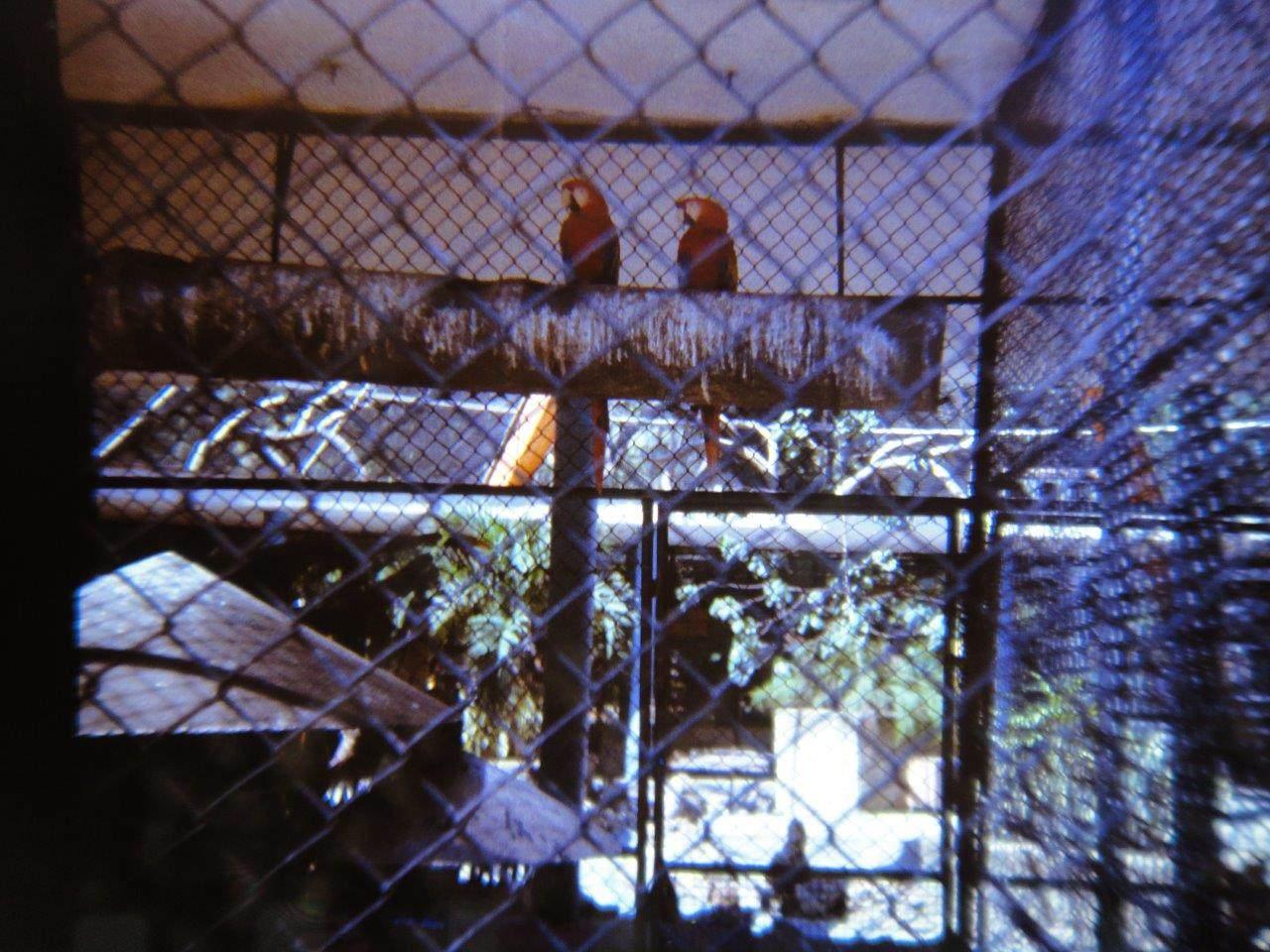 182. В Гаванском зоопарке