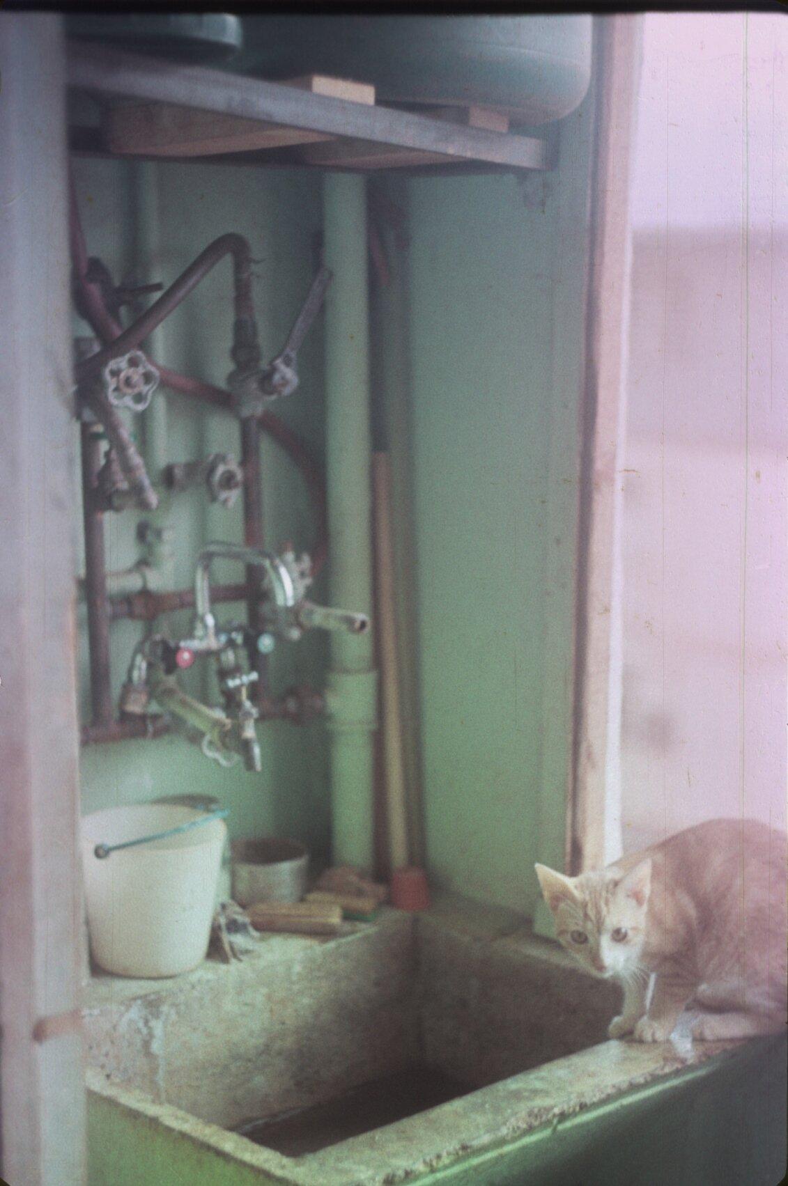 1985-1988. Кот-сантехник на хозбалконе