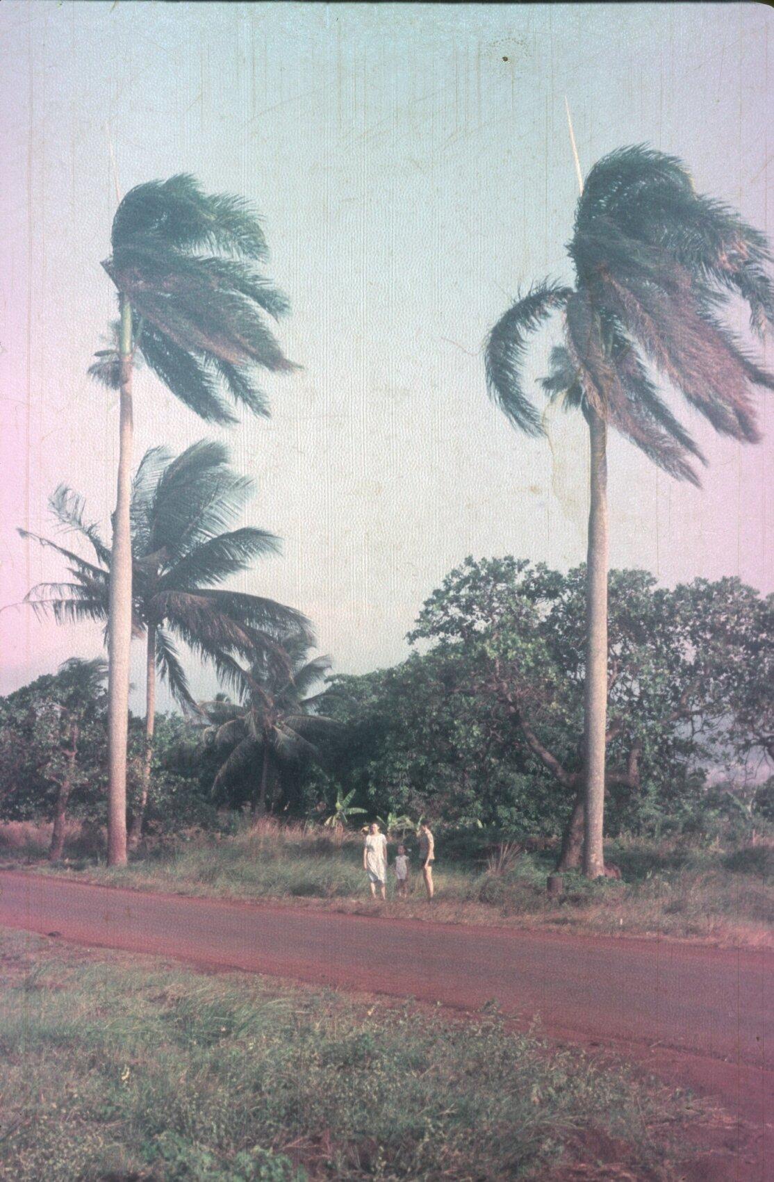 1985-1988. Пальмы лохматые от ветров с моря