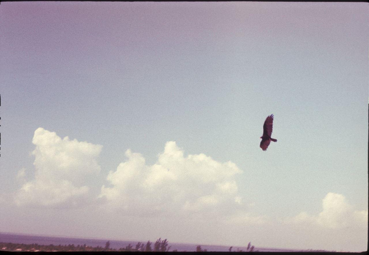 Гриф в полете. 1987