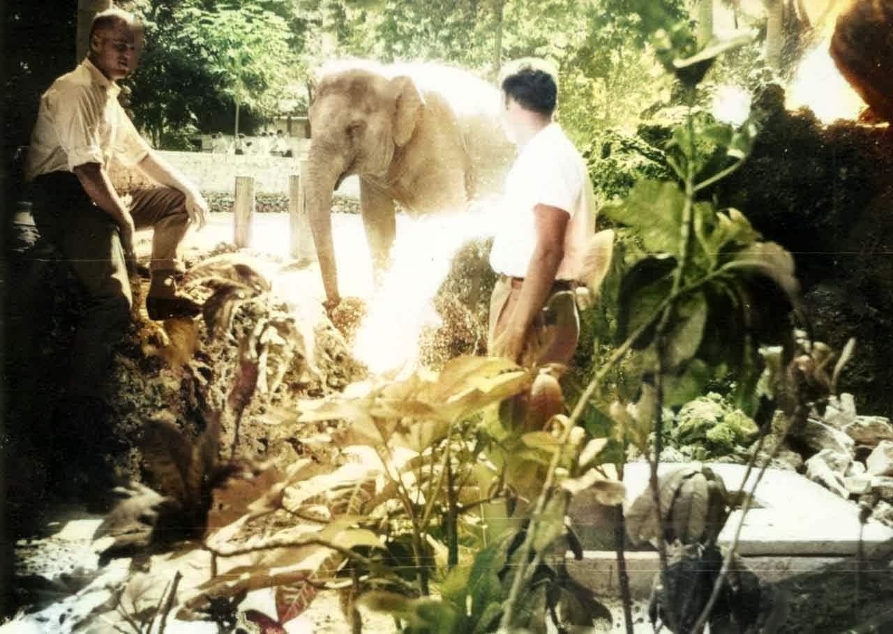 В зоопарке рядом со слоном