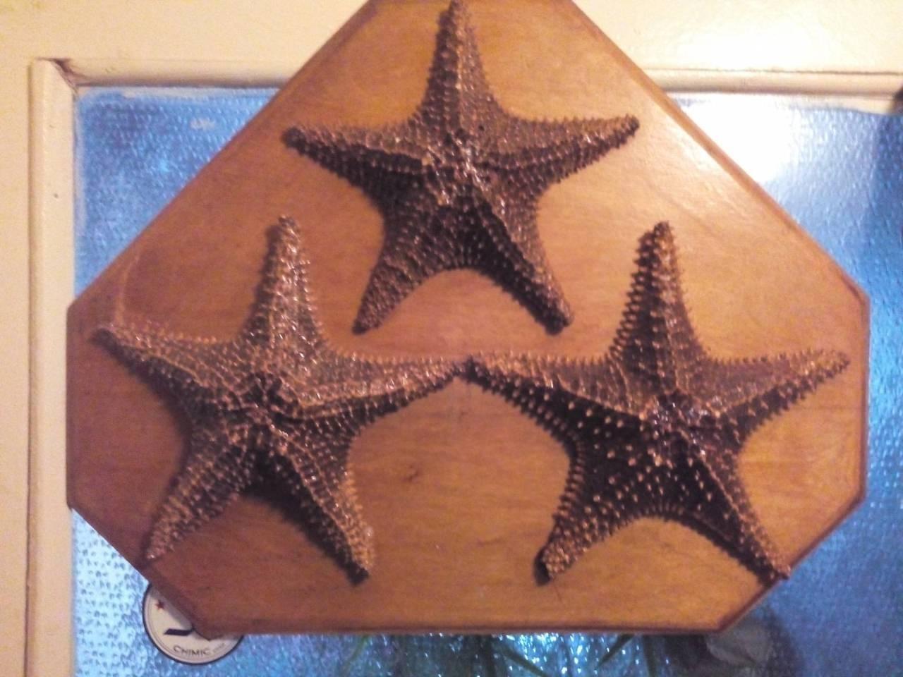 Три морских звезды на подставке
