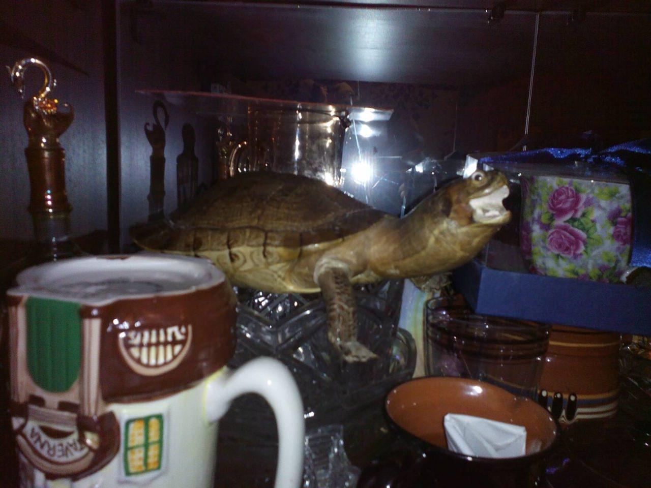 Морская черепашка