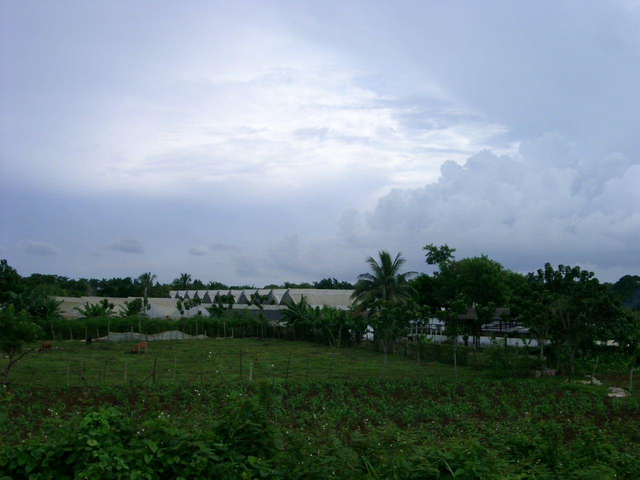 Кубинские парники и территория за забором части, фото 1