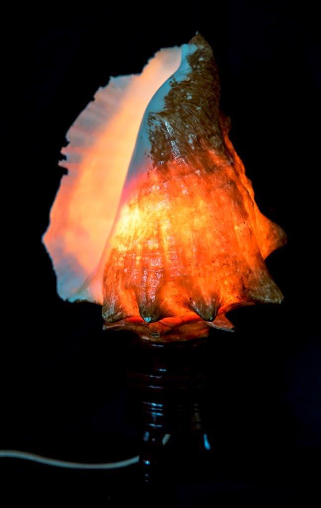 Ракушка-светильник