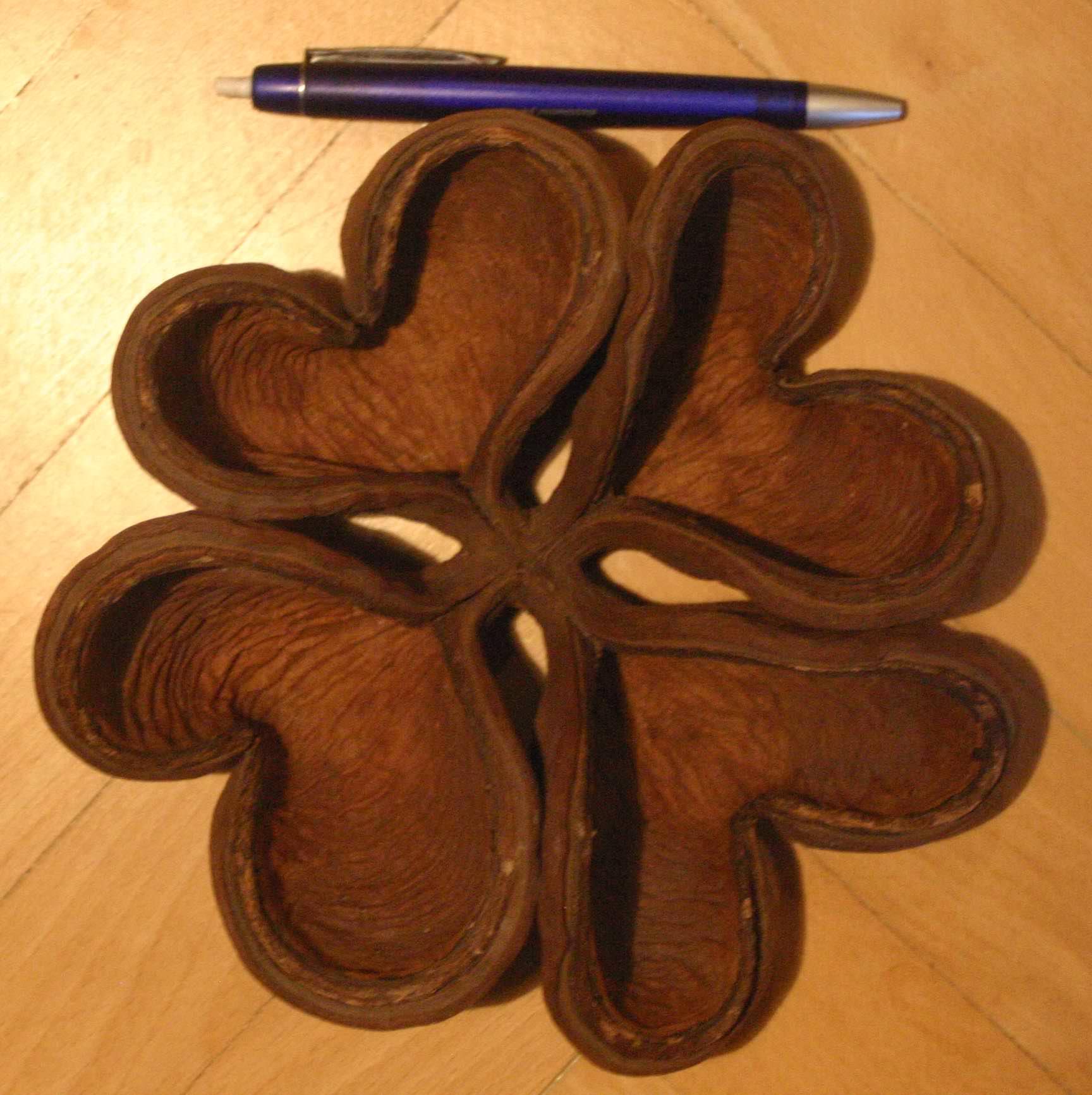 Околоплодник дерева Sterculia apetala (Panama tree), тип 1, фото 1