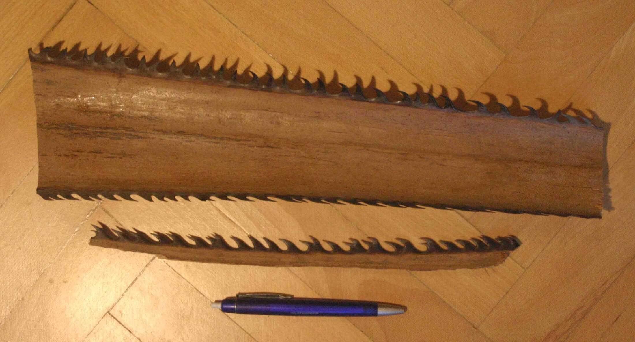 Пилообразный лист пальмы Washingtonia filifera (American cotton palm), фото 1