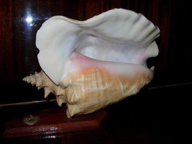 Морская раковина на подставке