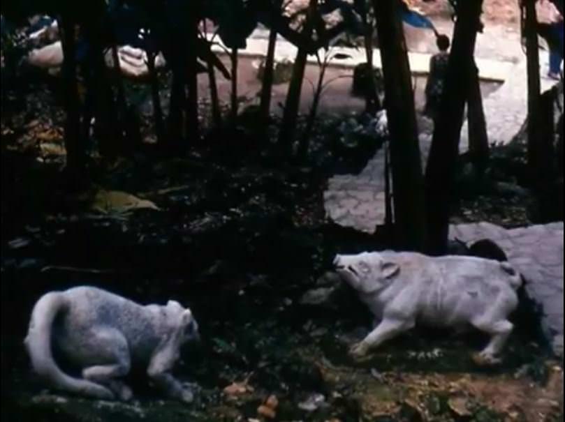 «Каменный зоопарк» в Ятерасе - Zoologico de Piedra. 1982-1984, фото 9