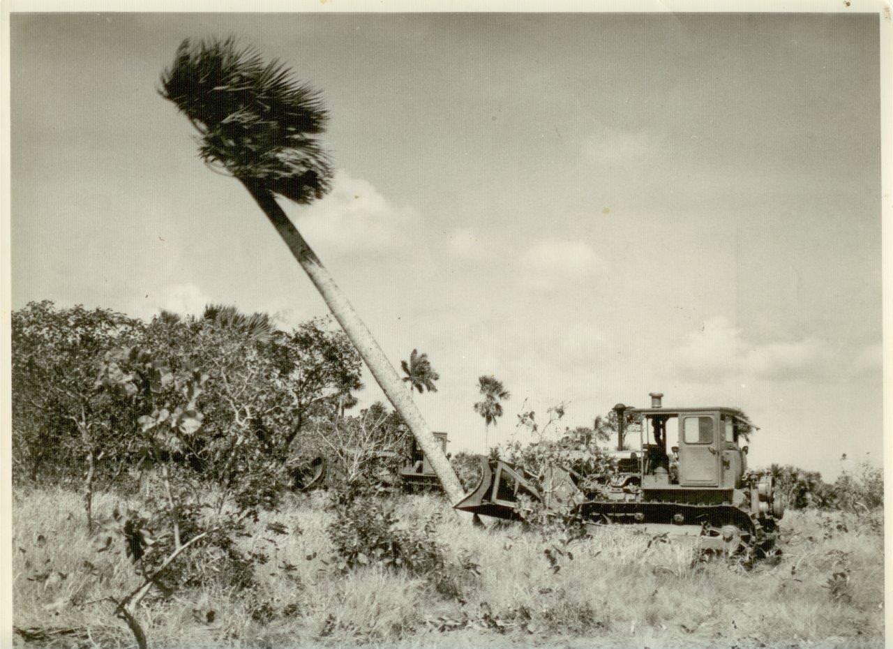 26. Расчистка территории от деревьев в Республике Куба. 1961 г.