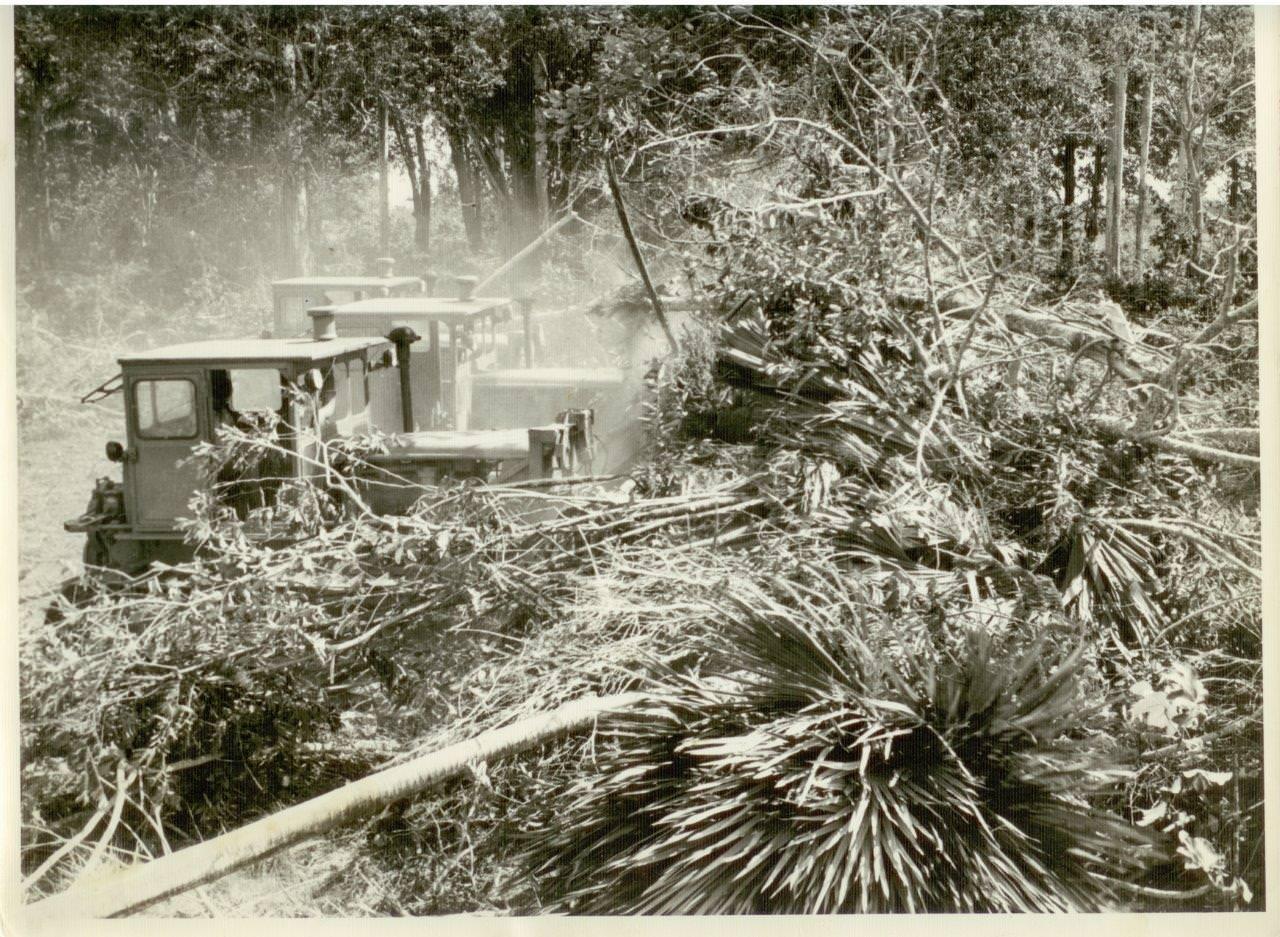 27. Вырубка тракторами пальмовых деревьев в Республике Куба. 1961 г.
