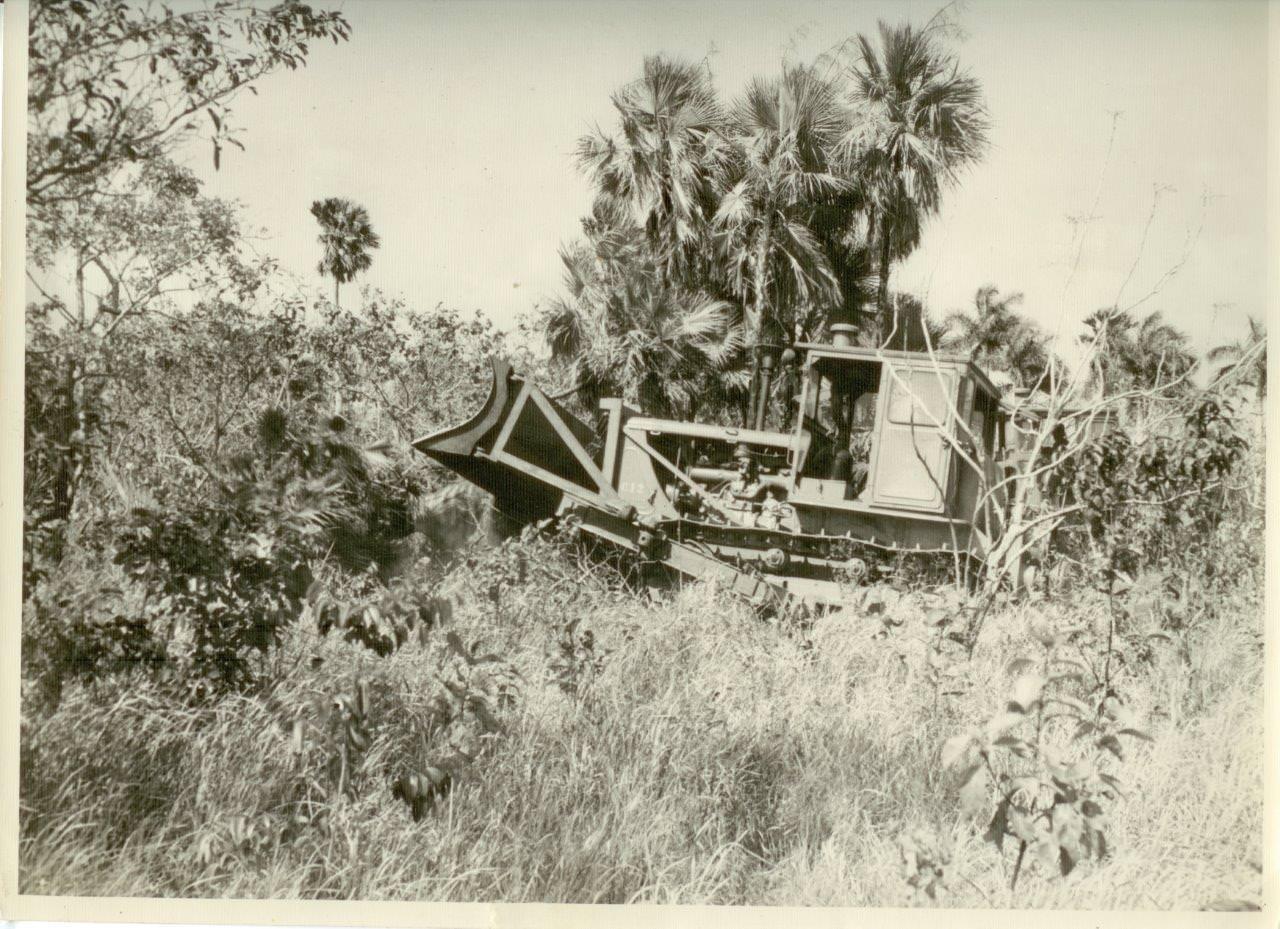 29. Расчистка территории от пальмовых деревьев в Республике Куба. 1961 г.