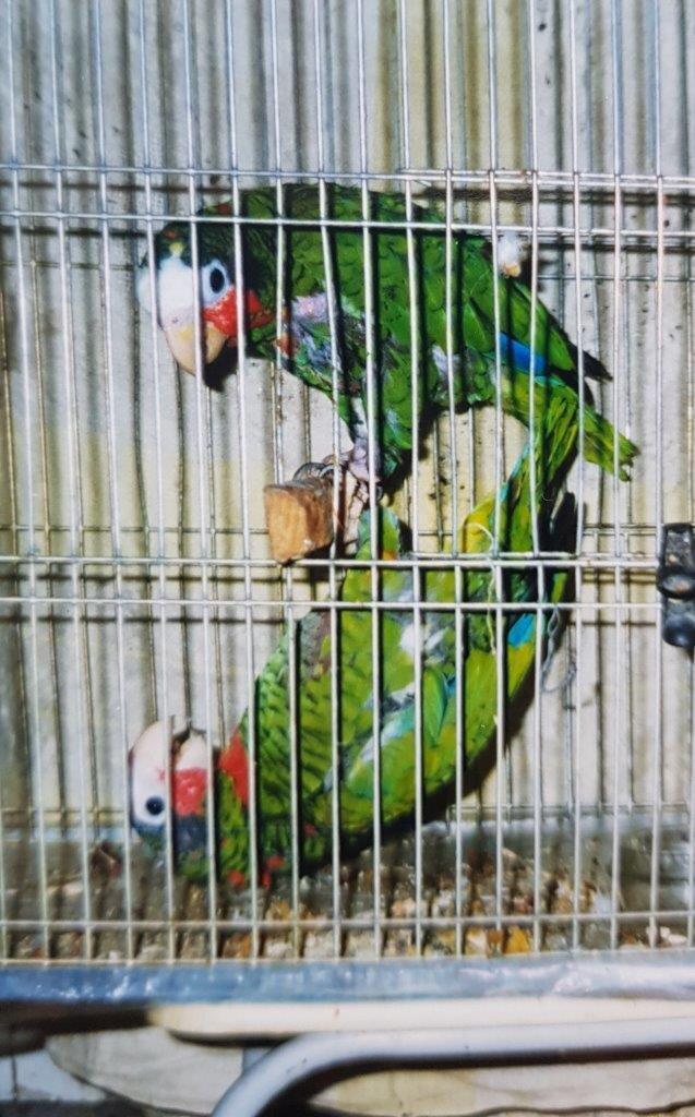 1983-1986, попугаи Проша и Кука