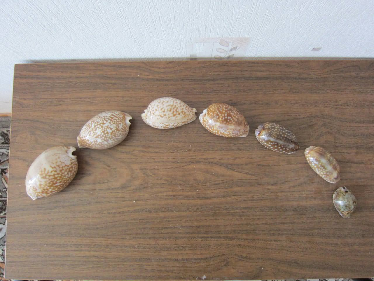 Коллекция морских раковин – 02