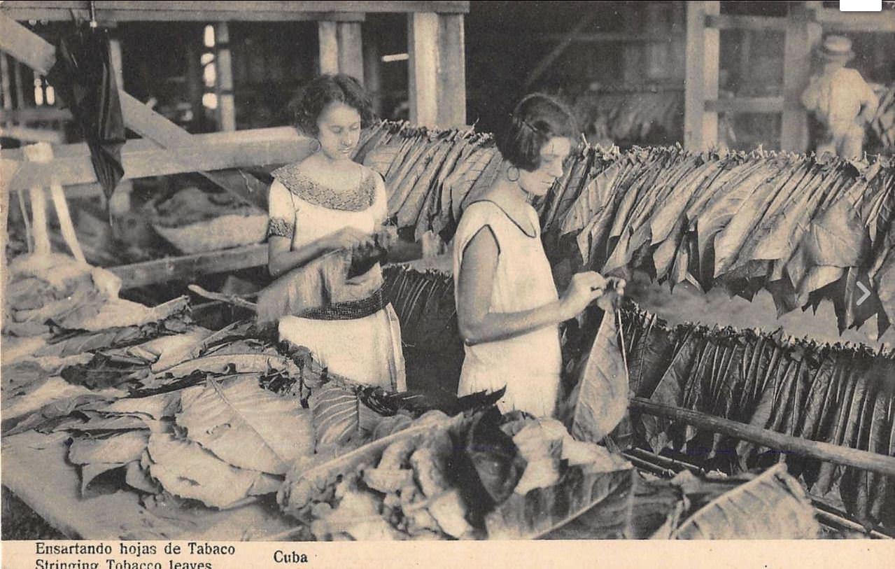 1910-е годы. Нанизывая табачные листья.