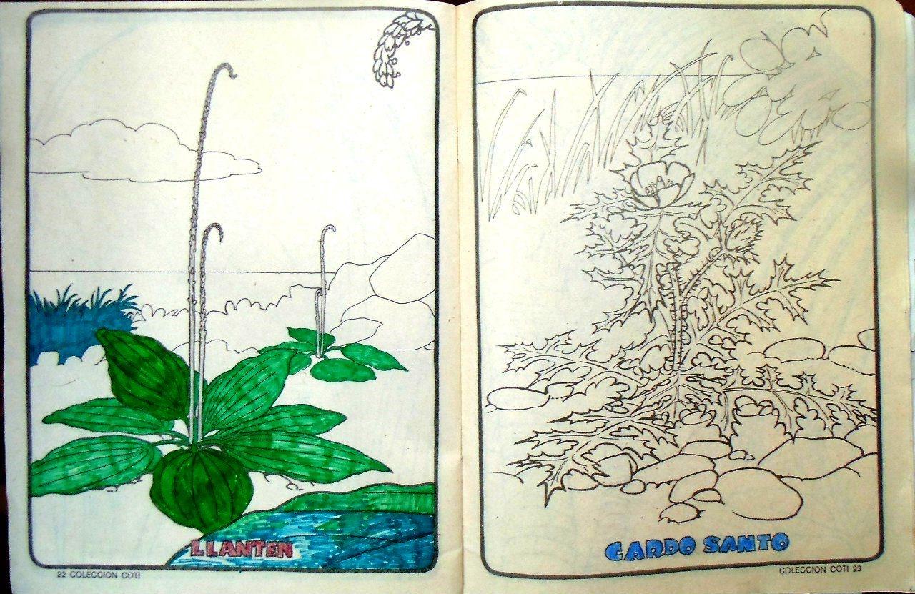 Стр. 22-23. «llanten» (подорожник) и «cardo santo» «расторопша»