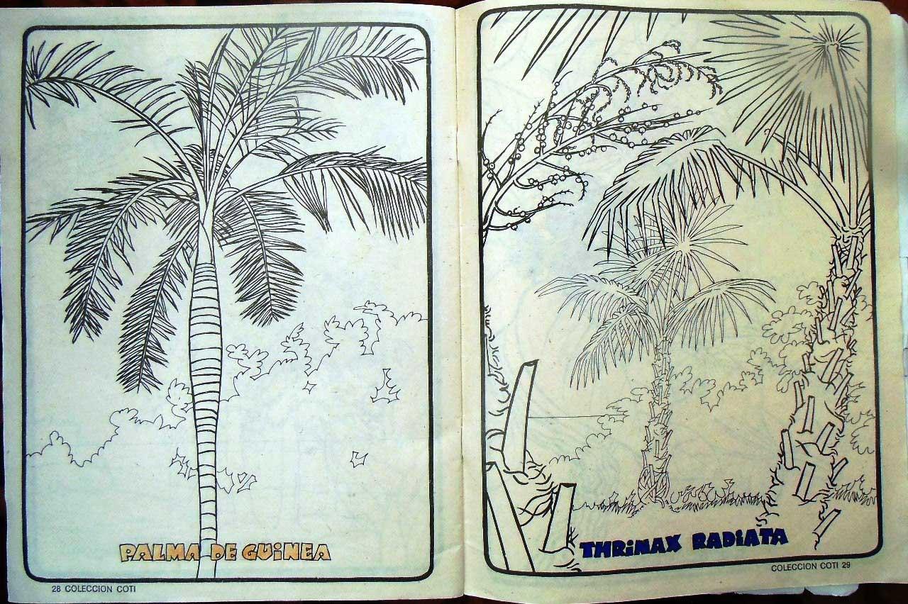 Стр. 28-29. «palma de guinea» (морская пальма) и «thrinax radiata» (соломенная пальма)