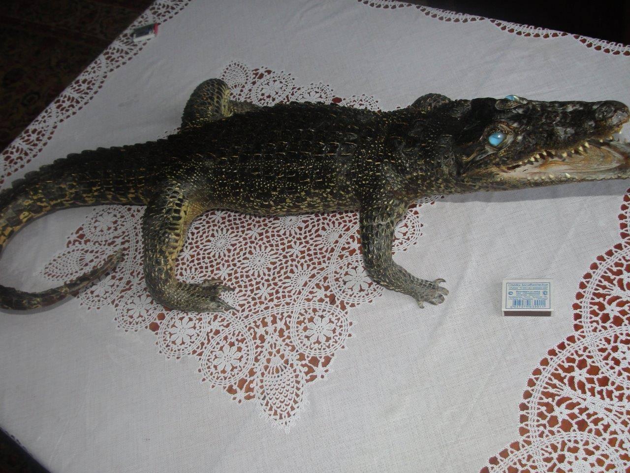 Крокодил, метровый, 1 ракурс
