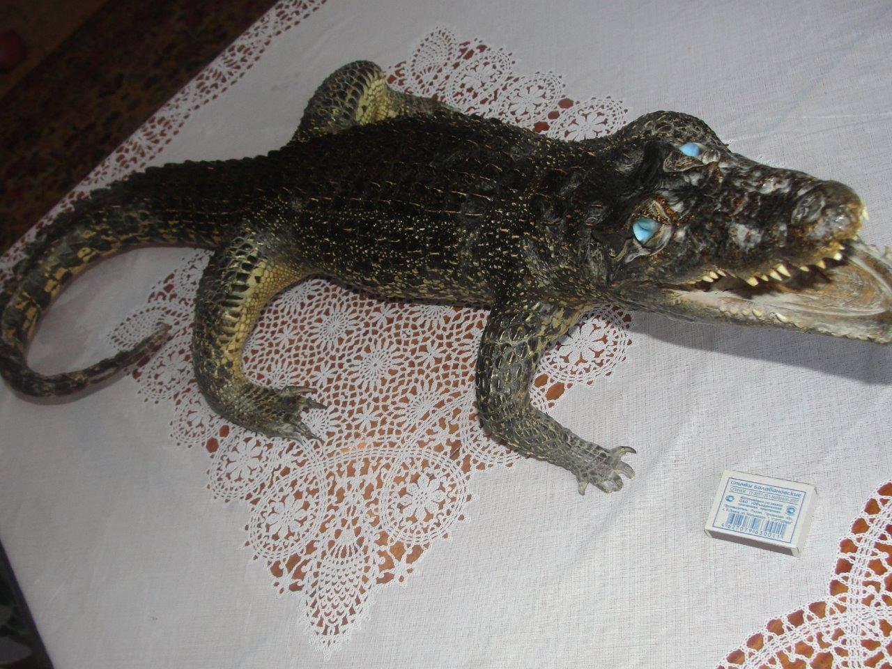 Крокодил, метровый, 2 ракурс