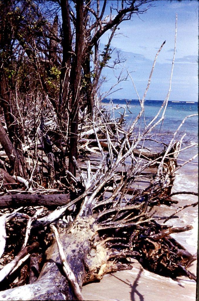 1983-1985. Океанский мусор