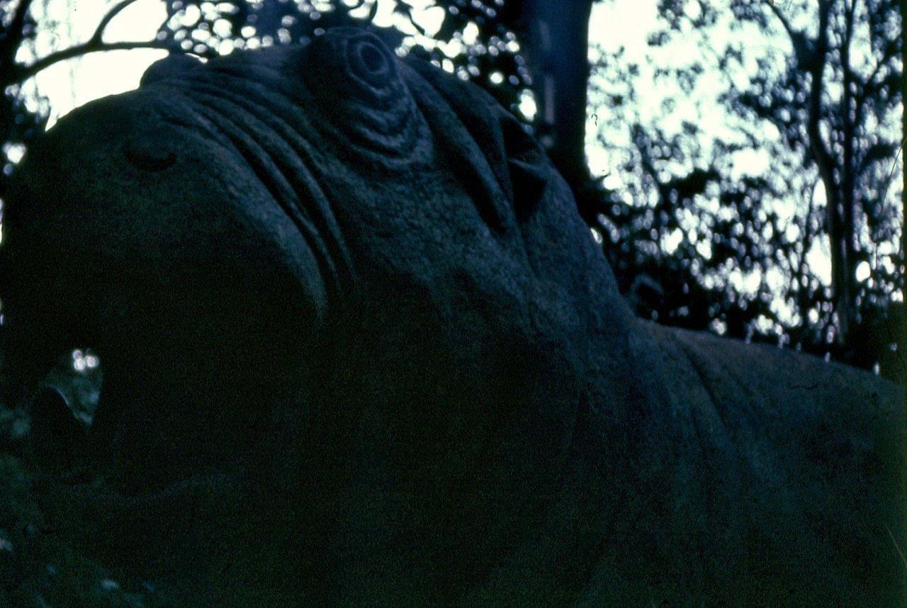 «Каменный зоопарк» в Ятерасе - Zoologico de Piedra. 1980-1984, фото 7