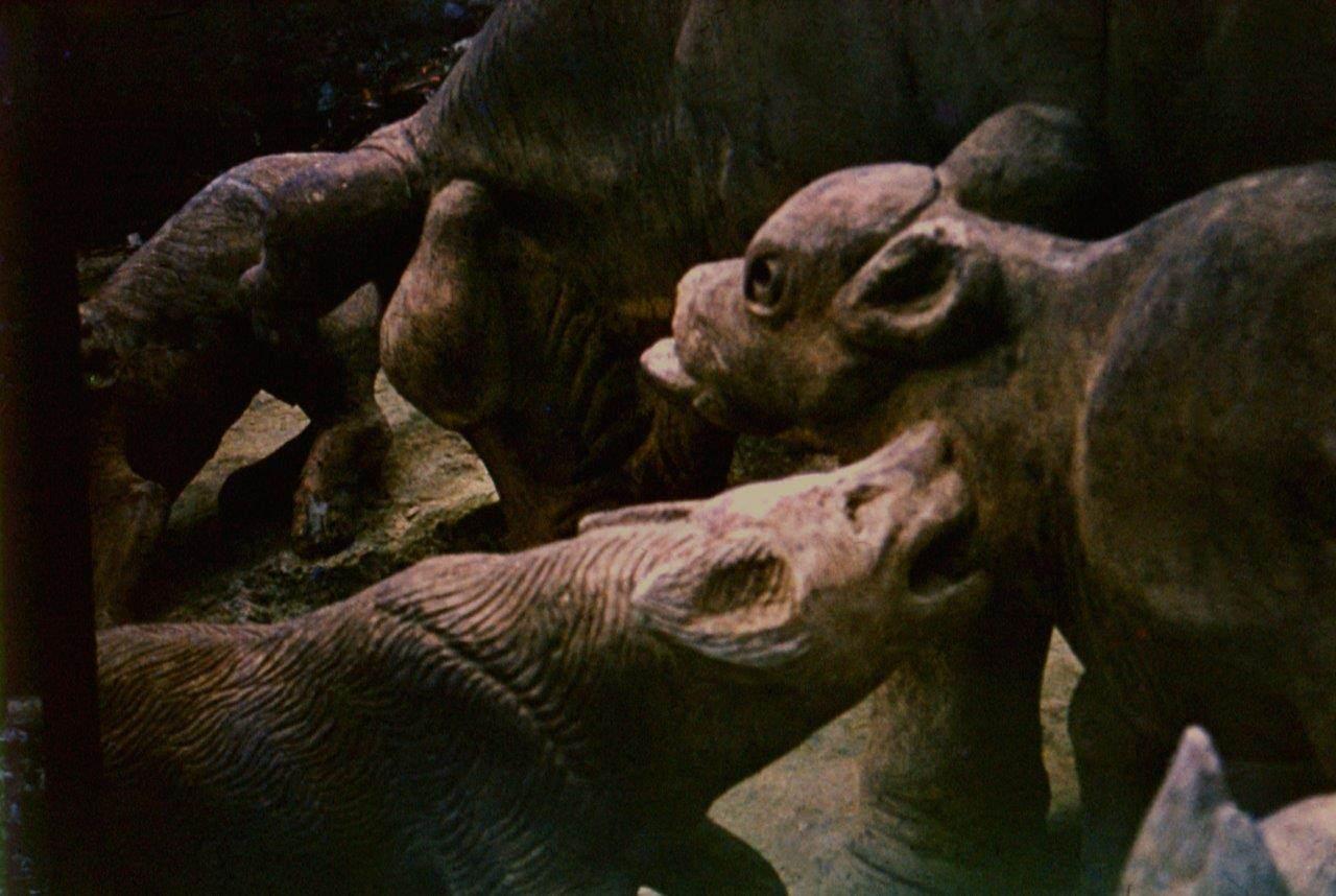 «Каменный зоопарк» в Ятерасе - Zoologico de Piedra. 1980-1984, фото 10