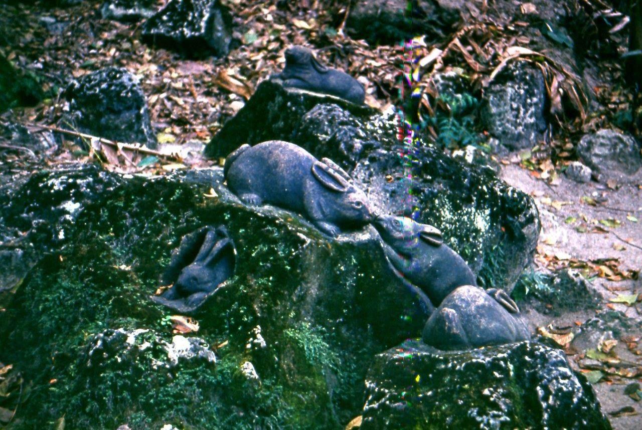 «Каменный зоопарк» в Ятерасе - Zoologico de Piedra. 1980-1984, фото 13