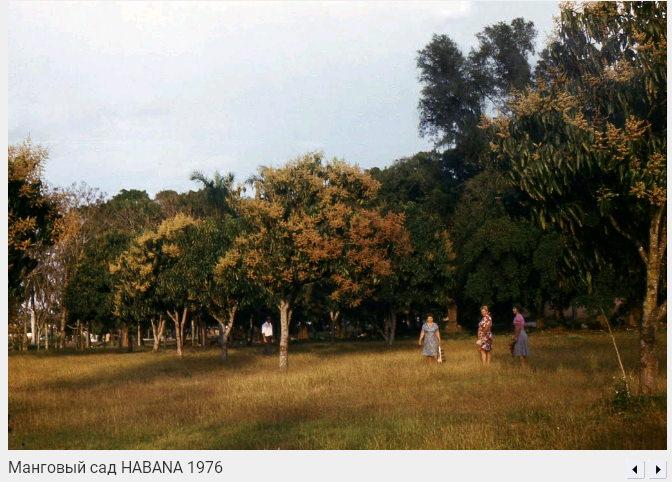 005. Манговый сад, 1976