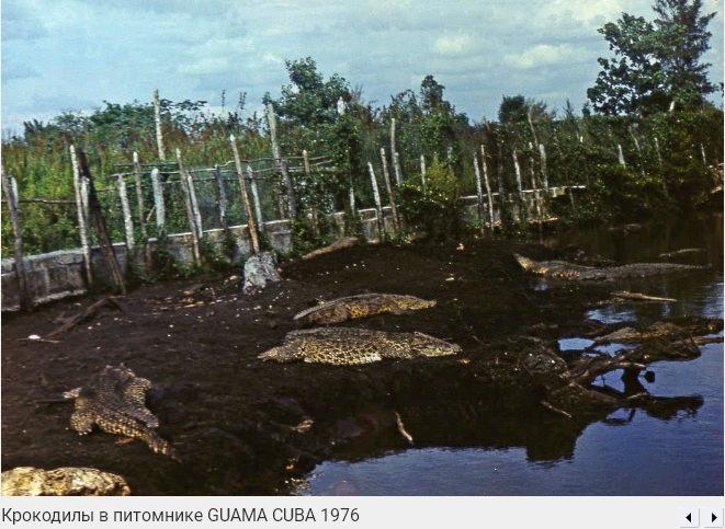 116. Крокодилий питомник в Гуама, 1976, фото 1