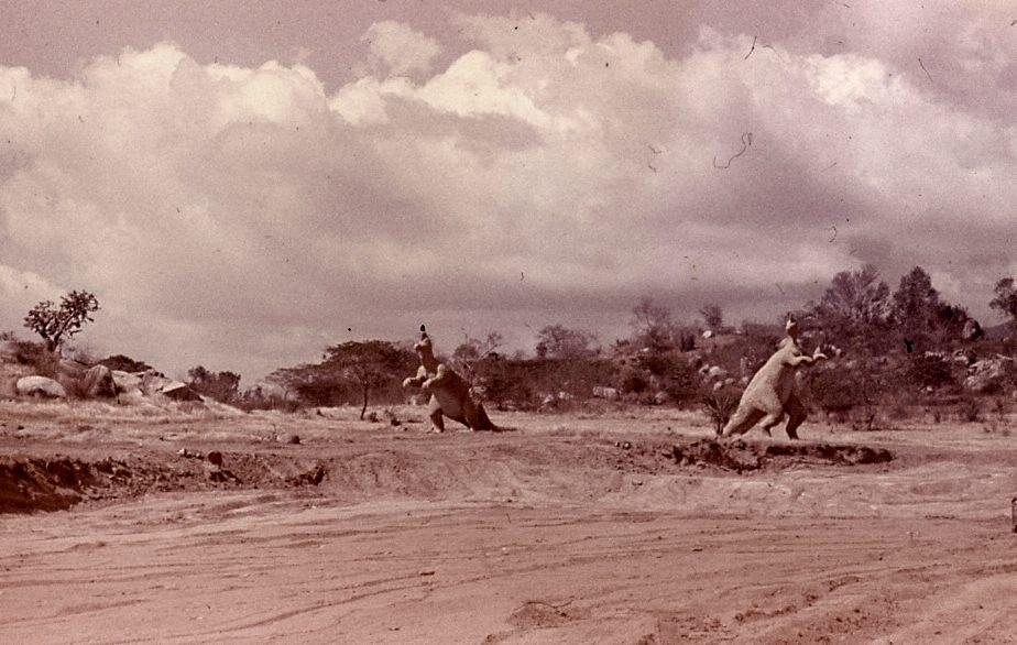 Сантьяго-де-Куба. 1983-1985. Долина динозавров по дороге в город.