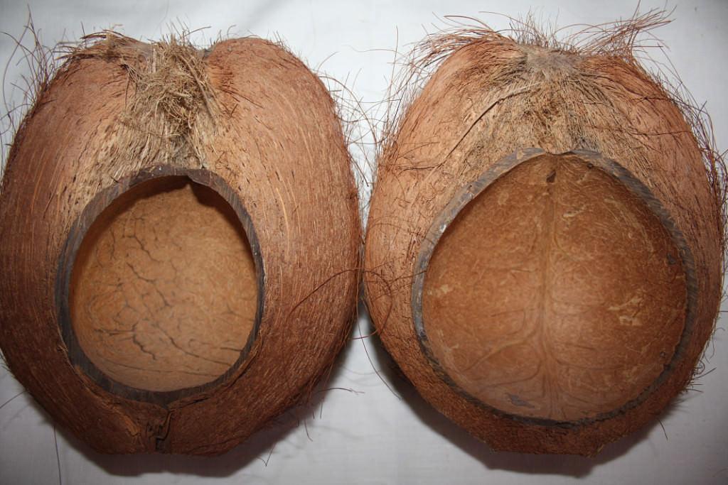 Маски львов, из половинок кокосовых орехов. Вид сзади.